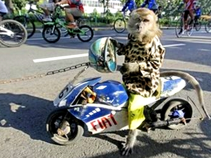 Monkey-on-a-Bike-1