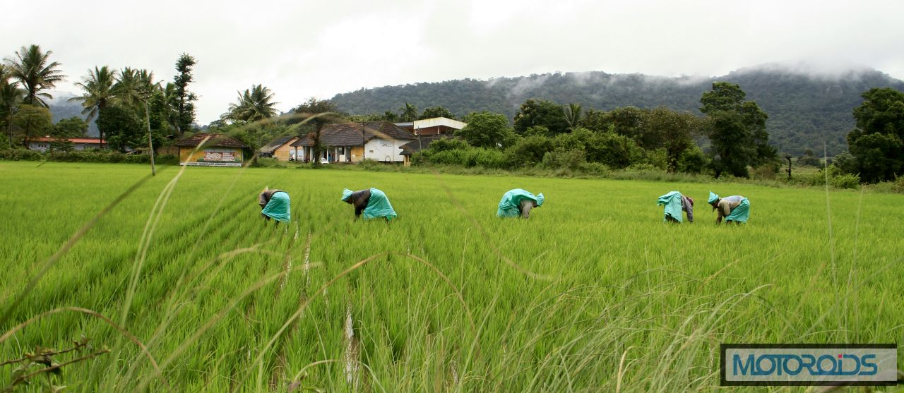 03-Paddy-cultivation-at-Bittangala