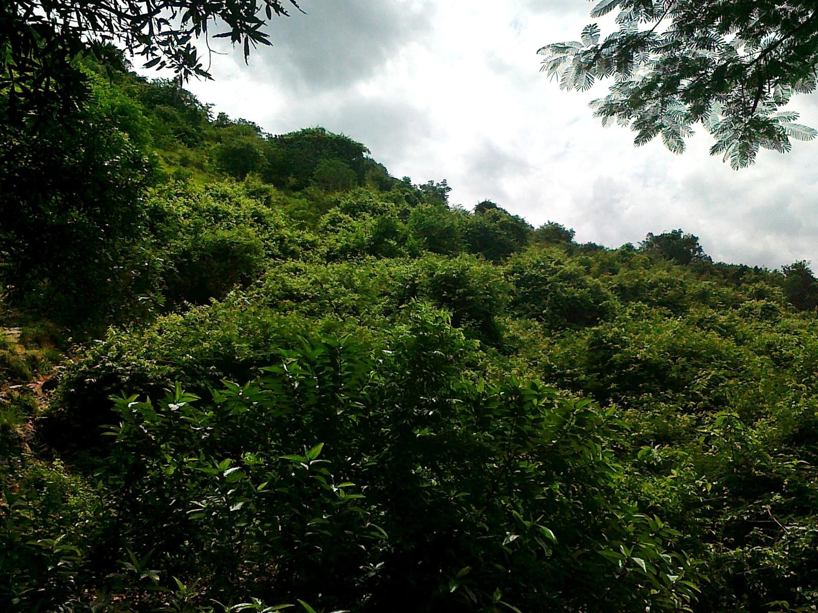 Kailasakona-Falls - TVS Road Trip
