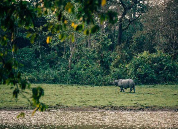 royal Enfield Tour Of Northeast 2018 Rhino Tour