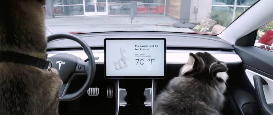 Tesla Dog Mode screen messege