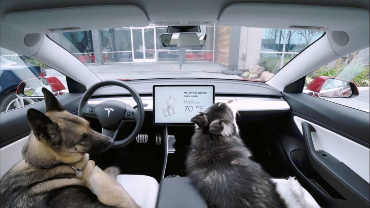 Tesla Dog Mode two dogs