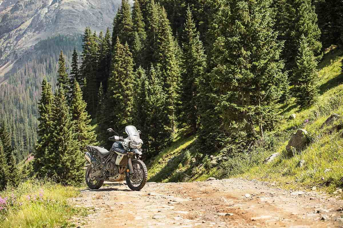 Tiger 800 XCA Forest view