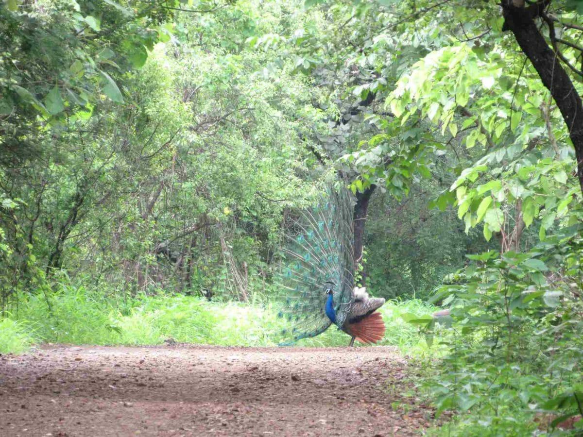 Image 2 – Warje Urban Forestry (1)