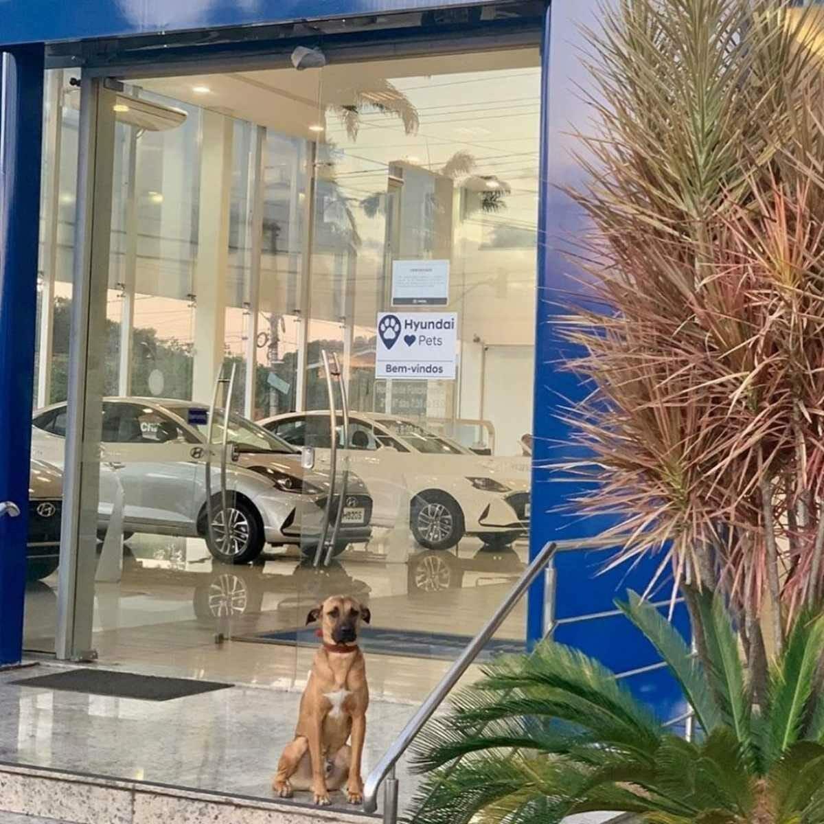 Hyundai Tucson Prime dog (1)