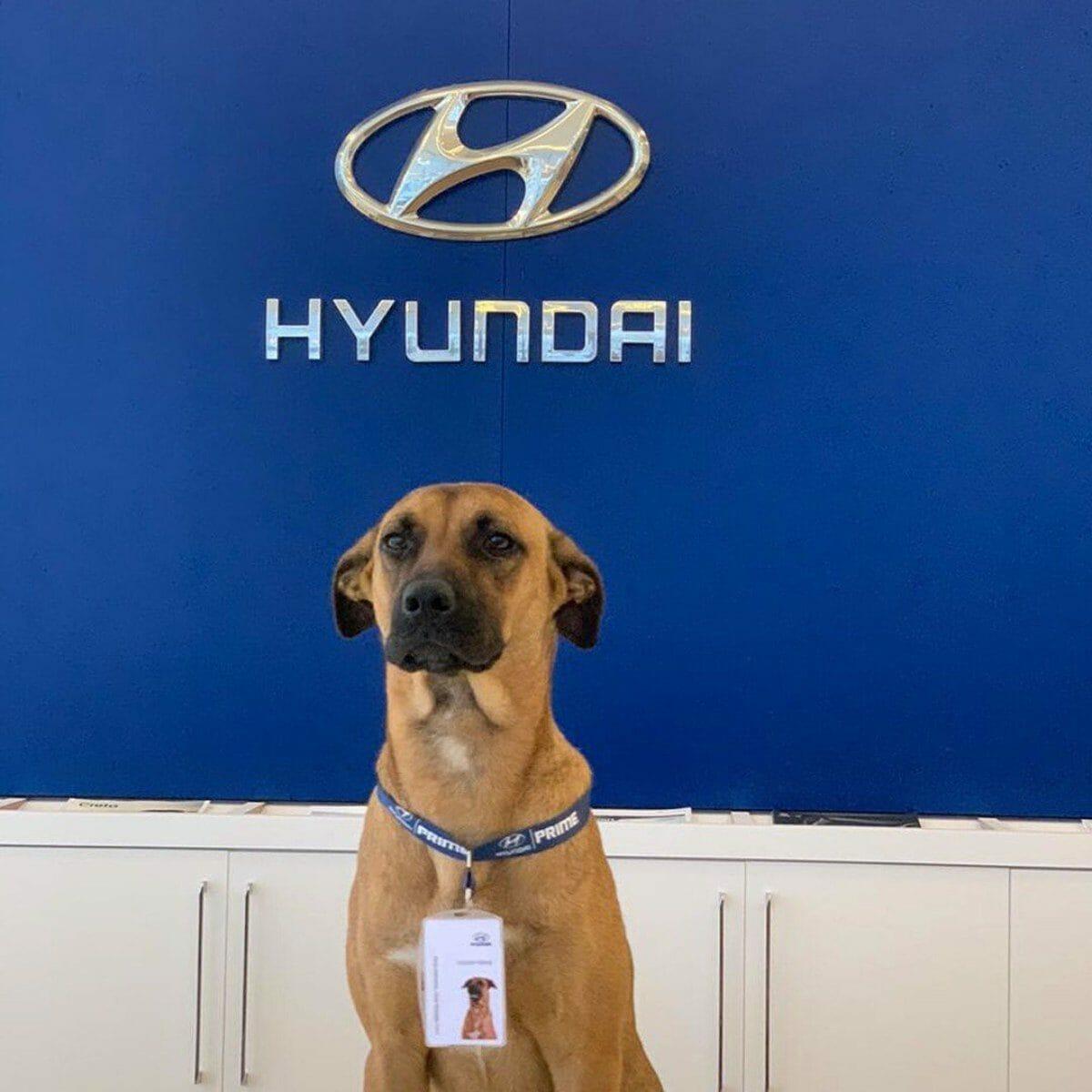 Hyundai Tucson Prime dog