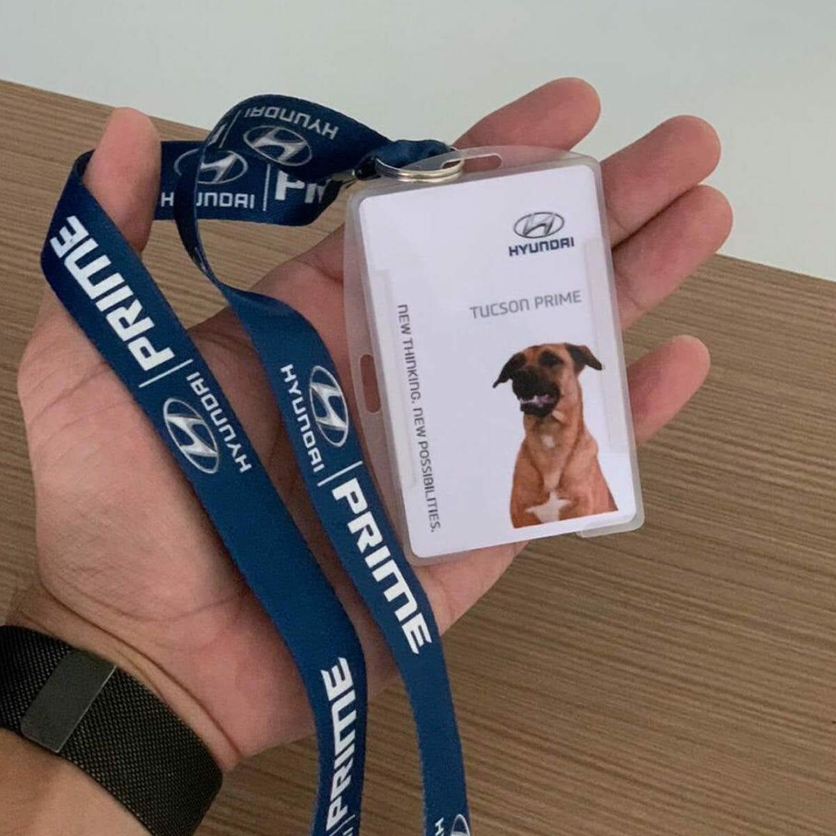 Hyundai Tucson Prime dog (2)