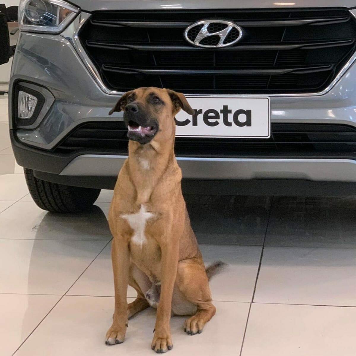 Hyundai Tucson Prime dog (3)