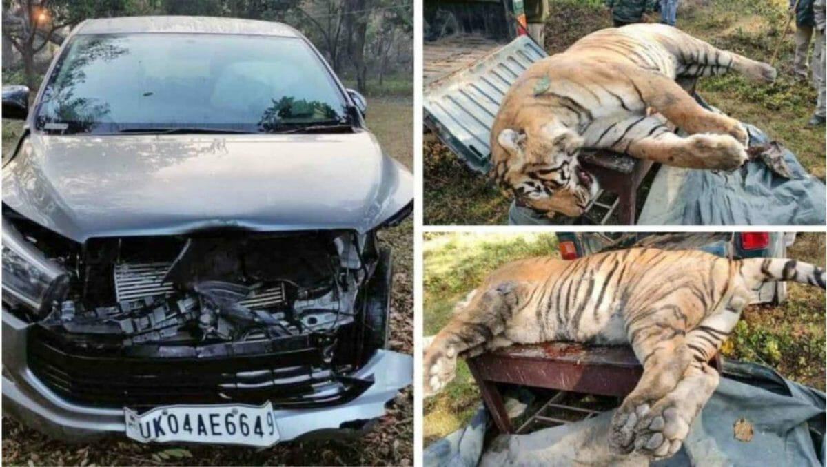 Overspeeding kills a tiger in Uttarakhand